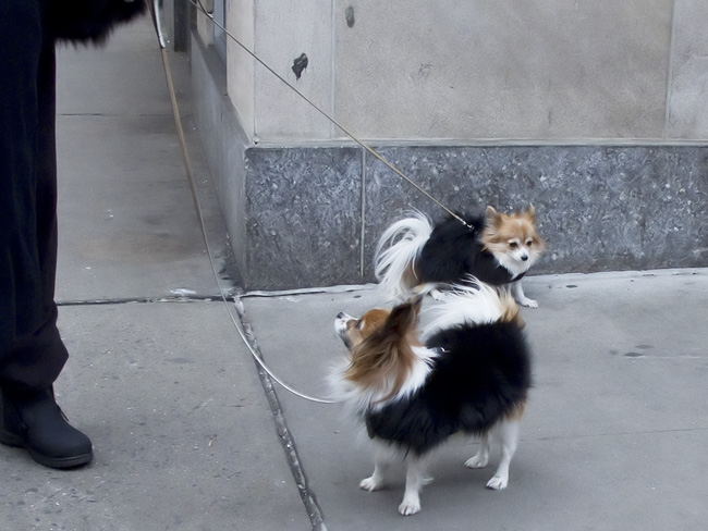 Fur in fur