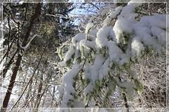 winter 2 (peter pirker) Tags: schnee winter tree canon landscape austria sterreich forrest krnten carinthia landschaft wald baum villach snwo eos550d wamrbad