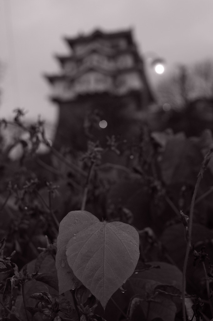 A leaf and Onomichi castle