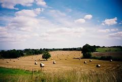 Haymaking (Mahfoo) Tags: fuji cosina harvest cx 100 hay reala cx2 haymaking
