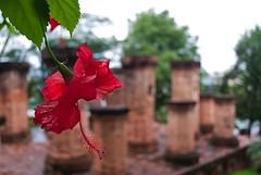 Thap Ba Ponagar, entrance (Stefano Schwetz) Tags: temple vietnam tempio nhatrang circolofotograficopaullese