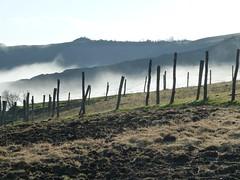 P1000016 (gzammarchi) Tags: italia natura campagna nebbia palo gesso paesaggio collina recinto camminata itinerario casalfiumanesebo