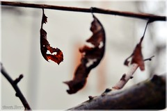 Amabili Resti  (samy_flickr) Tags: leaves leaf nikon 1855 soe 3100 flickraward