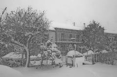 tormenta di neve (massimo palanza) Tags: snow neve tormenta dicembre bianco freddo nero abruzzo chieti fossacesia nikond300 flickrestrellas massimopalanza