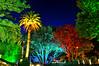 trees HDR (wiifm) Tags: flowers trees night lights wellington hdr botanicgardens thorndon nikond90
