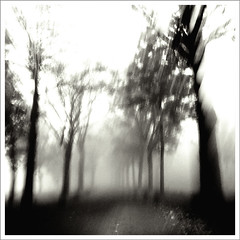 dreamy world (Diana~!) Tags: world road autumn trees mist netherlands fog square moving movement herfst dream diana dreamy weg beweging bewogen 500x500