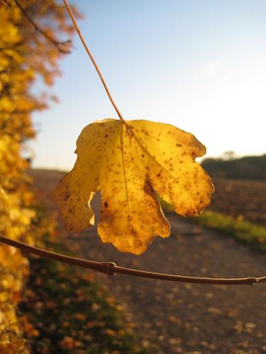 Goldener Oktober III