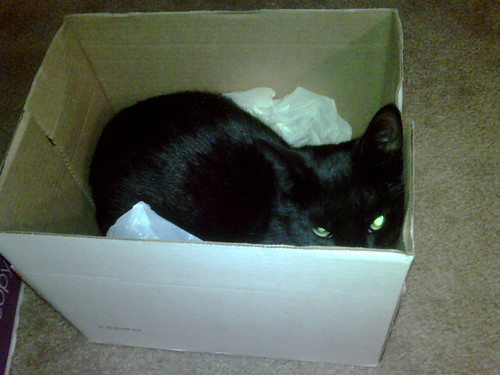 finally comfy in the tiny box.