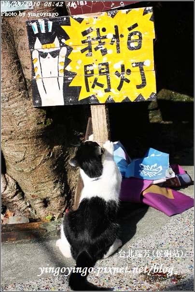 台北瑞芳(侯硐站)貓村20101128_I5602