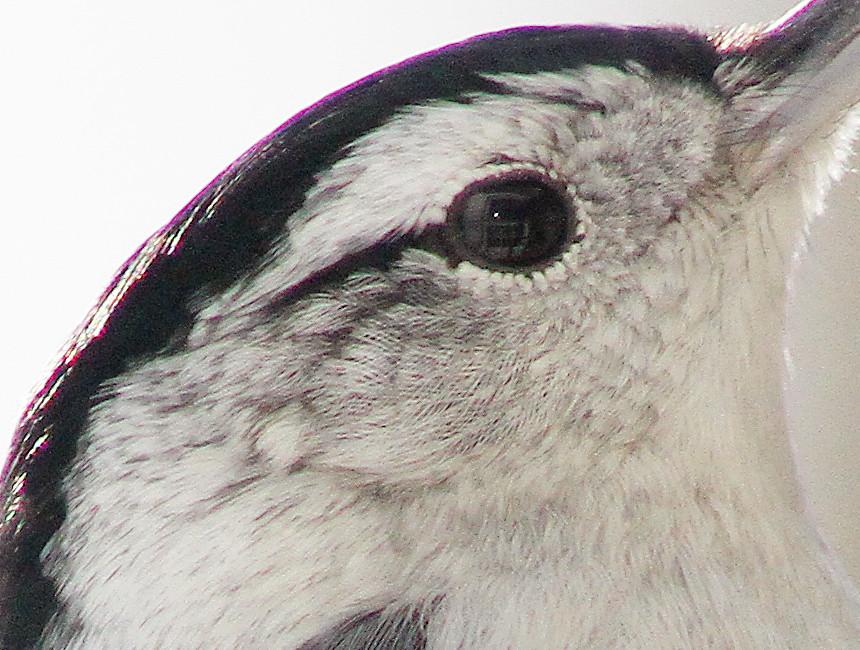 IMAGE: http://farm6.static.flickr.com/5284/5360995415_0c0a9caf13_b.jpg