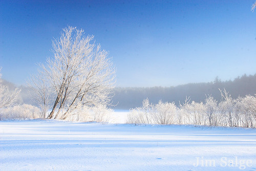 Hoarfrost on the Lakeshore