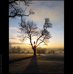 Early (peterphotographic) Tags: uk winter england sun cold tree sunrise early frost britain gloucestershire tewkesbury whydidigetupthisearly canong12