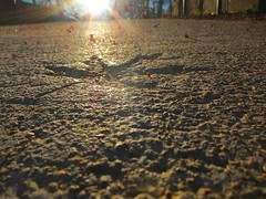Born again (prestonrittenhouse) Tags: winter light sun sunrise concrete dawn leaf ray glare impression