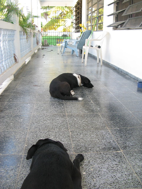 Tashi and Domino