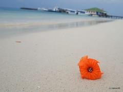 Beach (_takau99) Tags: trip travel beach topv111 pen january olympus maldives 2011 eriyadu northmaleatoll takau99 penlite epl1 gettyimagesjapanq1