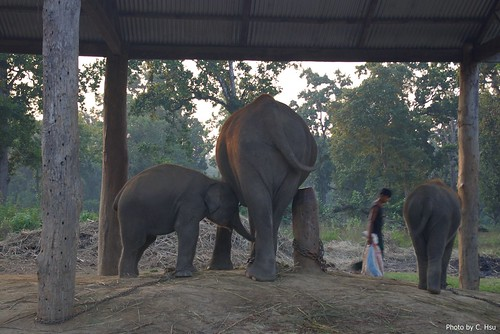 Elephant Breeding Centre (Chitwan)