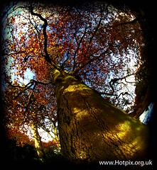 iPod Shuffle - A Forest (Hotpix [LRPS] Hanx for 1.5M Views) Tags: autumn trees brown hot tree green fall leaves yellow season leaf pix pics smith tony bark hdr picks thefall hotpix hotpics tonysmith tofall platinumphoto hotpicks hotpixuk tonysmithhotpix tonysmithotpix