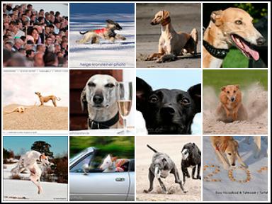 Windhundzeitung - serie: Windhund - Knipser by Helmut Dietz: 27-11-2010