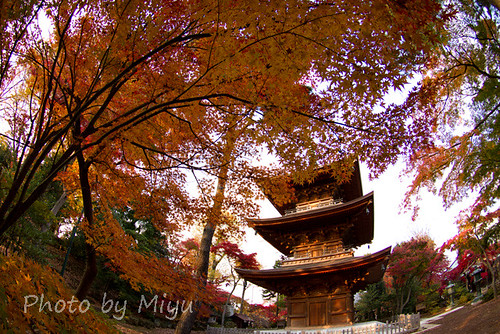 Three-story pagoda with maple