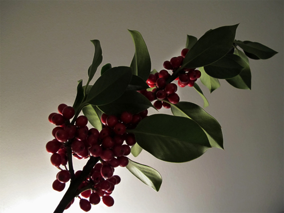 101128_Weihnachtsbeeren