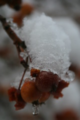 Ian'sDigitalPhotos Snow EDINBURGH 047 (ianharrywebb) Tags: iansdigitalphotossnowedinburgh yahoo:yourpictures=elements yahoo:yourpictures=nature yahoo:yourpictures=snow yahoo:yourpictures=winter