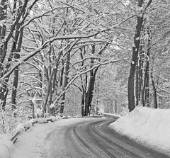 Winter road (Ingrid0804) Tags: road trees winter snow denmark coldness winterroad 100commentgroup rememberthatmomentlevel1