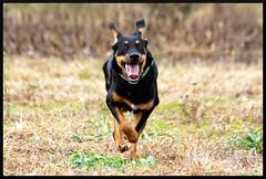 run baby run (anna pozzi) Tags: cane canon is prato 70200 f4 corsa lilli gioco eos450d