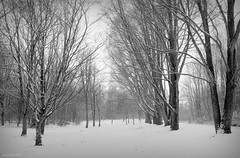 (andrewlee1967) Tags: snow trees blackandwhite bw dukinfield canonpowershot sx110is tameside cheshire uk gb england britain andrewlee1967 andrewlee