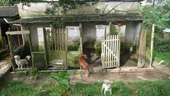 Portões dos canis do Jardim