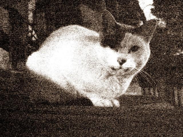 Today's Cat@2010-12-07