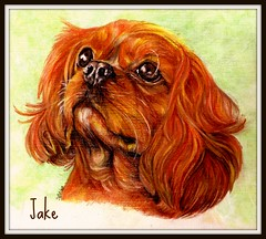 You've got a friend (Andreadm66) Tags: dog art animal pencil artwork drawing spaniel picnik cavalierkingcharles watercolourpencil