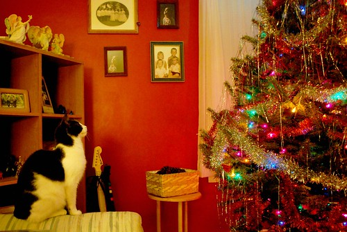 Tesla Looks at the Tree