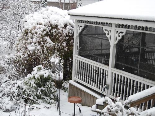 First Snow, December 2010