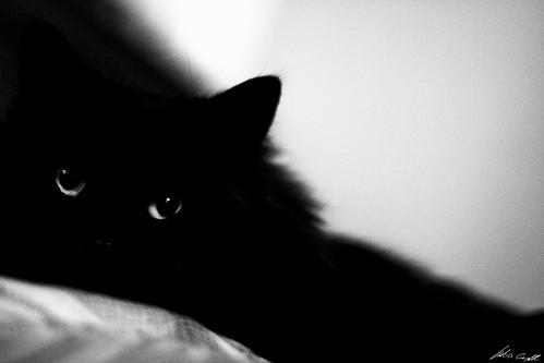 Black Thing
