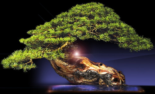"""Bonsai 062 • <a style=""""font-size:0.8em;"""" href=""""http://www.flickr.com/photos/30735181@N00/5261939854/"""" target=""""_blank"""">View on Flickr</a>"""