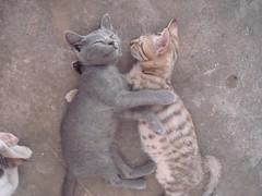 DSC07205 (U N C) Tags: pakistan sleeping cats cat kittens azadkashmir muzaffarabad