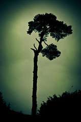 "(""Olga"") Tags: tree silhouette warwickcastle hcs clichesaturday"