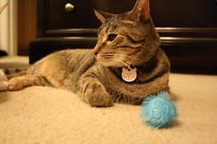 Maggie with the blue fuzzy ball