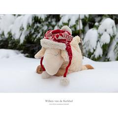 Merry Christmas   Fijne Kerst (Willemvdk) Tags: christmas winter snow hat toy happy sheep sneeuw merry abercrombie fitch kerstmis 2010 kerst muts schaap knuffel fijne