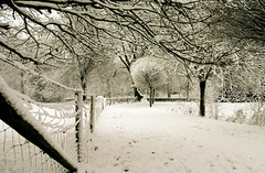 Snowy world (Martijn W) Tags: winter snow cold utrecht sneeuw frio bij wijk koud wijkbijduurstede duurstede frew