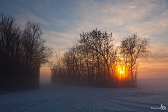 End of a beautiful winter day (BraCom (Bram)) Tags: trees winter sunset sky sun mist snow cold fog landscape zonsondergang bomen sneeuw lucht zon landschap goereeoverflakkee bracom