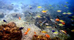 wild fish underwater tropical colourful coralreef thephillipines sonydsctx5