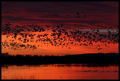 Species Count from Bosque del Apache (gainesp2003) Tags: new bird nature birds del sunrise landscape mexico dawn apache wildlife birding national bosque nm flightdeck refuge snowgeese birdcount specieslist