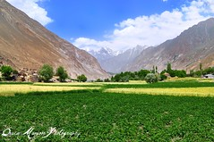 Ishkoman Valley (Qasim Jadoon) Tags: pakistan beautiful landscape amazing nikon scenery valley areas northern feilds gilgit mansoor qasim baltistan ishkoman jadoon d5000 colorphotoaward