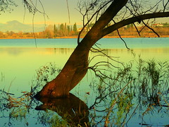 Laghetto del Frassino(protected oasis) (Daniele Sala Photogra