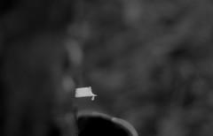 Rubber Collection -4 (HamimCHOWDHURY  [Read my profile before you fol) Tags: life light shadow red portrait blackandwhite sun white black green nature canon eos twilight colorful faces blu sony surreal excellent dhaka vaio rgb hobigonj bangladesh dlsr 60d rubbergarden rubbercultivation 595036 framebangladesh rubberplan digombor dawanbari marufdeawan