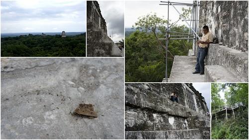 提卡爾金字塔Tikal6