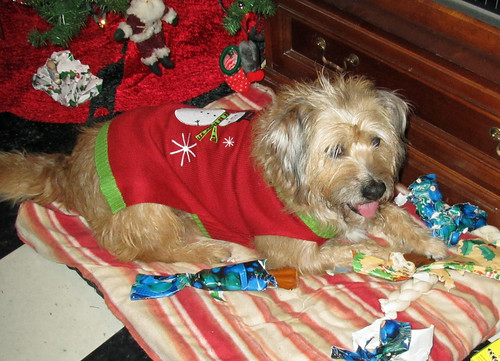 A very Shaggy Christmas