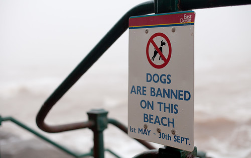 dogs are banned on this beach