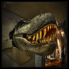 Cheeeeeese (Kemoauc) Tags: animal wall museum photoshop germany deutschland nikon dino dinosaur stuttgart fisheye hdr topaz dinosaurier wrttemberg d90 photomatix nikond90 hdrterrorist kemoauc